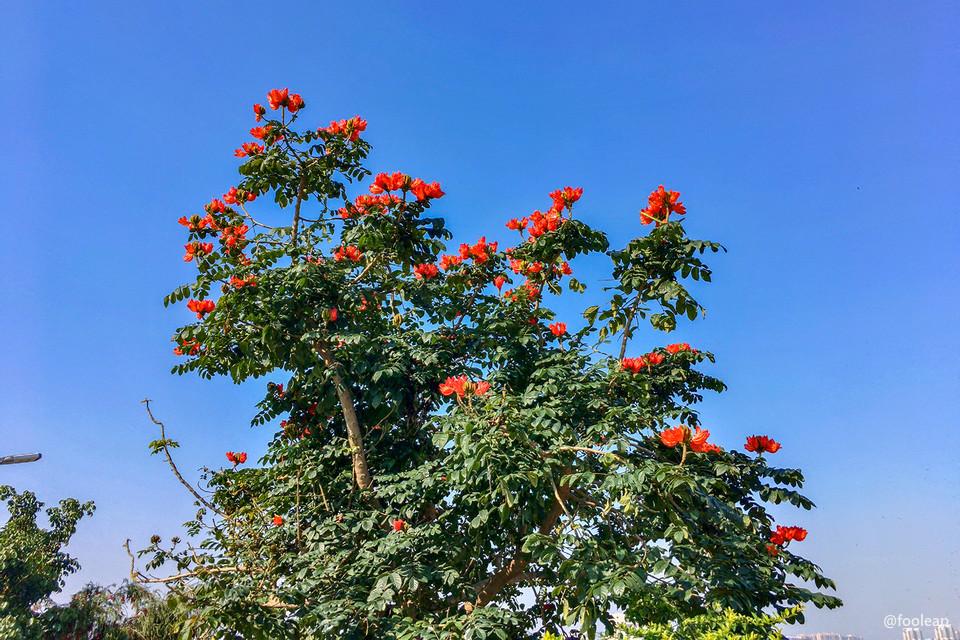 渡亭堤顶的花