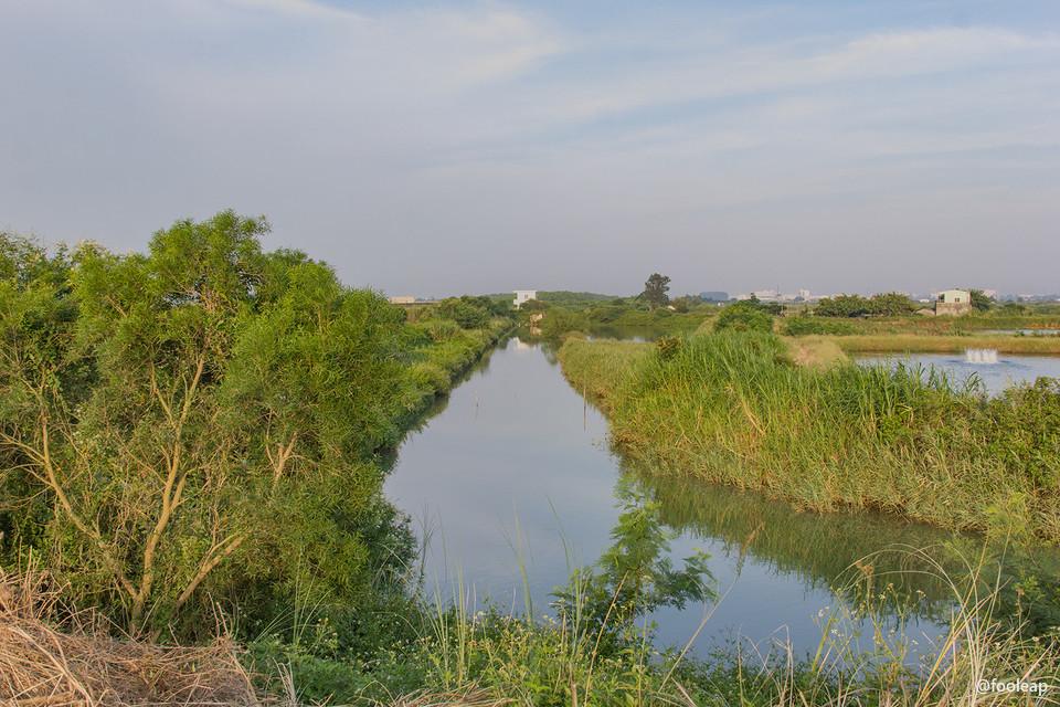 布满绿草的河沟