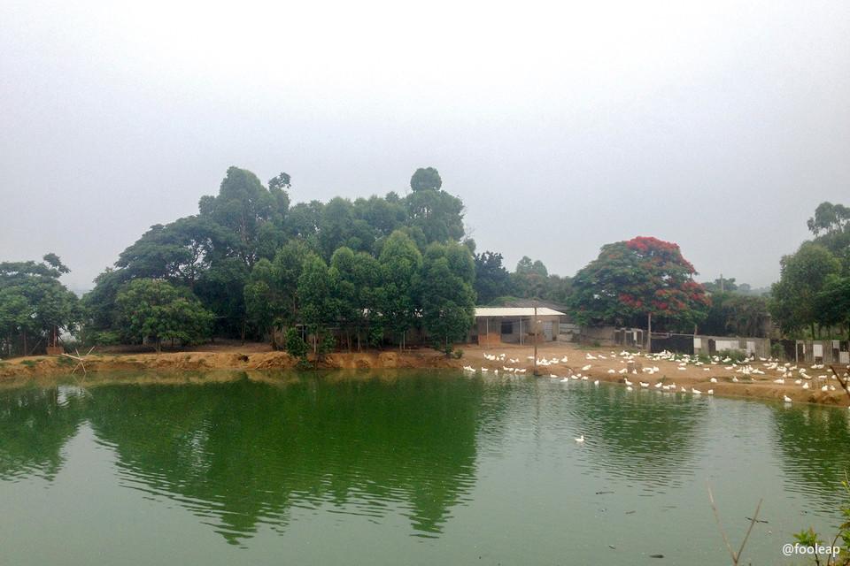 堤墘的池塘