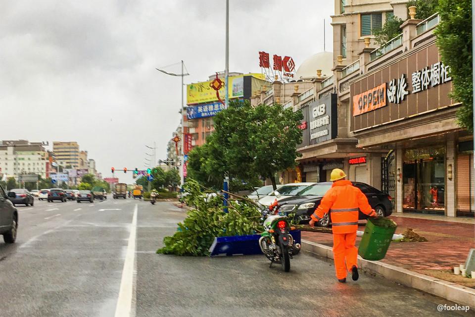 324 国道上倒伏的树木